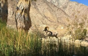 Borrego Springs The New Boomtown