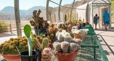 The Living Desert Zoo and Gardens Opens New Desert Plant Conservation Center
